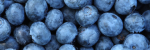 blueberries-300x100
